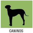 caninos